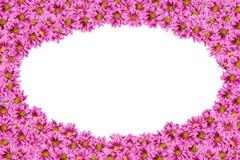 1 предпосылка цветет пинк Стоковые Изображения