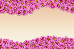 1 предпосылка цветет пинк Стоковые Фотографии RF