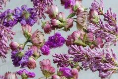 предпосылка цветет пинк Стоковая Фотография RF