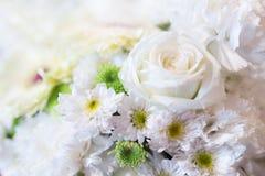 Предпосылка цветка белых роз - (Селективный фокус) Стоковое Фото