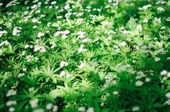 Предпосылка цветка весны, snowdrops Стоковые Фотографии RF