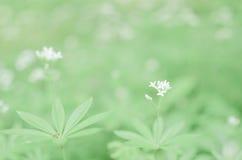 Предпосылка цветка весны, snowdrops Стоковая Фотография