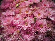 Предпосылка цветка крупного плана фиолетовая Стоковое фото RF