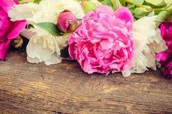 Предпосылка цветка пиона Стоковое Изображение