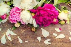 Предпосылка цветка пиона Стоковые Изображения RF