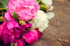 Предпосылка цветка пиона Стоковые Фото
