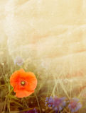 Предпосылка цветка стоковая фотография
