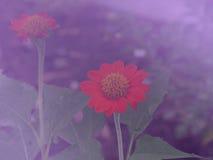 Предпосылка 12 цветка Стоковые Изображения