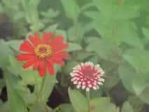 Предпосылка 13 цветка Стоковая Фотография RF