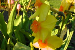 Предпосылка цветка Garden Стоковые Изображения RF