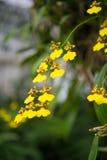 Предпосылка цветка Garden Стоковая Фотография