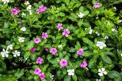 Предпосылка цветка Garden Стоковое Изображение