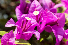Предпосылка цветка Garden Стоковые Фотографии RF