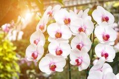Предпосылка цветков орхидей и листьев зеленого цвета Стоковая Фотография