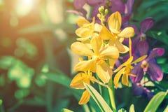 Предпосылка цветков орхидей и листьев зеленого цвета Стоковые Изображения