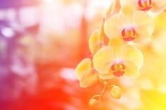 Предпосылка цветков орхидей и листьев зеленого цвета Стоковое Фото