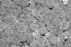Предпосылка цветков, черно-белая Стоковая Фотография RF