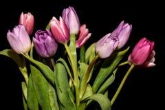 Предпосылка черноты букета цветков тюльпанов Стоковое Изображение RF