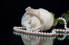Предпосылка черноты жемчуга белой розы Стоковая Фотография