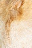 Предпосылка шерстей козы бура Стоковая Фотография RF