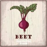 Предпосылка эскиза свежих овощей Винтажная иллюстрация чертежа руки свеклы Стоковая Фотография