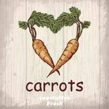 Предпосылка эскиза свежих овощей Винтажная иллюстрация чертежа руки моркови Стоковые Фотографии RF