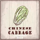 Предпосылка эскиза свежих овощей Винтажная иллюстрация чертежа руки китайской капусты Стоковая Фотография