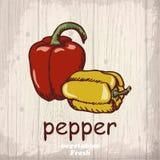 Предпосылка эскиза свежих овощей Винтажная иллюстрация чертежа руки перца Стоковые Изображения