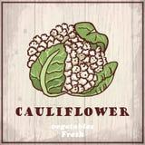 Предпосылка эскиза свежих овощей Винтажная иллюстрация чертежа руки цветной капусты Стоковые Изображения RF