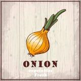 Предпосылка эскиза свежих овощей Винтажная иллюстрация чертежа руки лука Стоковое Фото