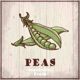 Предпосылка эскиза свежих овощей Винтажная иллюстрация чертежа руки горохи Стоковое Фото