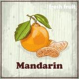 Предпосылка эскиза свежих фруктов Винтажная иллюстрация чертежа руки мандарина Стоковое Изображение RF