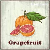 Предпосылка эскиза свежих фруктов Винтажная иллюстрация чертежа руки грейпфрута Стоковое Изображение