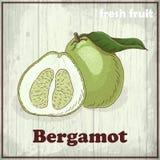 Предпосылка эскиза свежих фруктов Винтажная иллюстрация чертежа руки бергамота Стоковые Изображения
