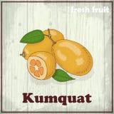 Предпосылка эскиза свежих фруктов Иллюстрация чертежа руки кумквата Стоковое Фото