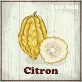 Предпосылка эскиза свежих фруктов Иллюстрация чертежа руки цитрона Стоковые Изображения RF