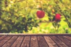 Предпосылка яблоневого сада Стоковое Фото