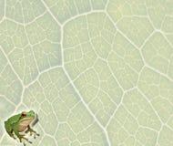 Предпосылка лягушки Стоковое Изображение
