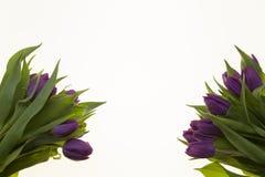 Предпосылка для поздравительной открытки с тюльпанами цветков Карточка с цветками для wedding годовщины приглашений Стоковое Фото