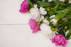 Предпосылка для приглашения, поздравления с пионами цветет Стоковое Фото