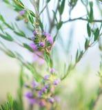 предпосылка birdies вал весны пар bloosom сказовый флористический Стоковые Фото
