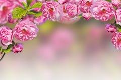 предпосылка birdies вал весны пар bloosom сказовый флористический Стоковые Фотографии RF