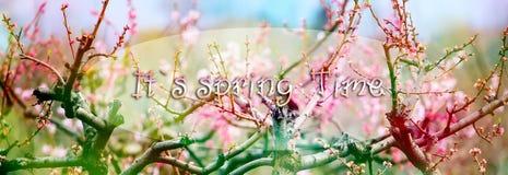 предпосылка birdies вал весны пар bloosom сказовый флористический Стоковые Изображения RF