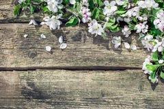 предпосылка birdies вал весны пар bloosom сказовый флористический Стоковая Фотография RF