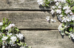 предпосылка birdies вал весны пар bloosom сказовый флористический Стоковое Изображение RF