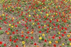 предпосылка birdies вал весны пар bloosom сказовый флористический Стоковая Фотография