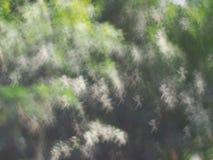 Предпосылка bokeh абстрактных светов роскошная Стоковая Фотография RF