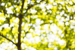 Предпосылка Bokeh от солнца под тенью деревьев Стоковая Фотография