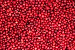 Предпосылка Cowberry Стоковые Фотографии RF