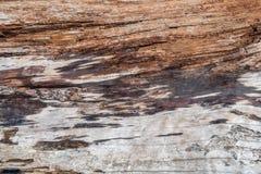 Предпосылка Driftwood Стоковая Фотография RF